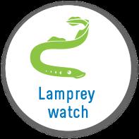 project_lamprey